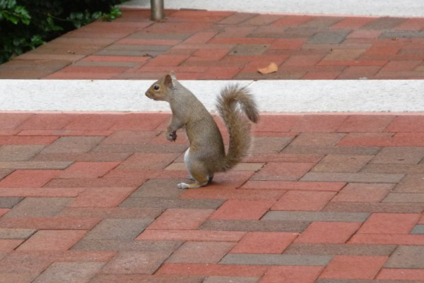 Ein Eichhörnchen. Es legt sich in guten Zeiten einen Wintervorrat an. Es sorgen vor.