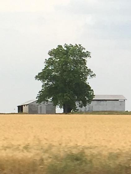 Ein Freund hat seine Familie in Alabama. Sie leben ganz einfach auf der Farm. Sie bauen ihr eigenes Gemüse an, haben Nutztiere und sind zufrieden.